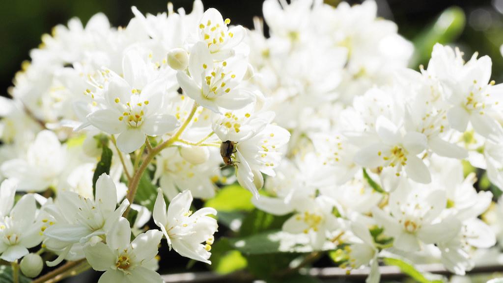 Les fleurs de printemps 2021