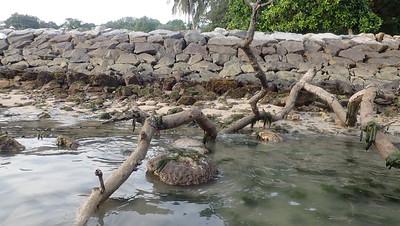 Large debris and corals
