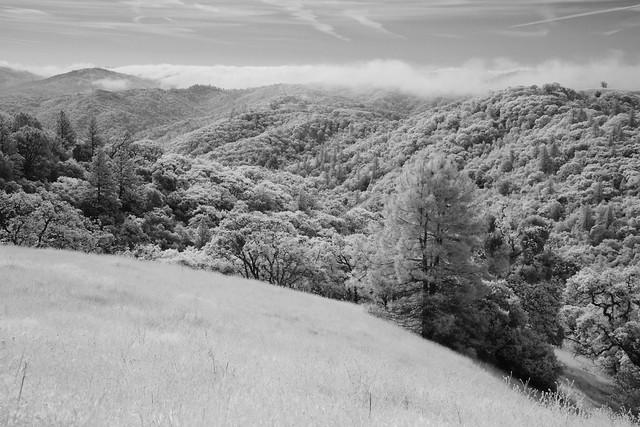 Henry Coe State Park IR (2)