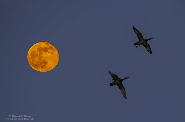 Full moon rising at Ampertal N°3