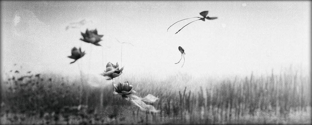 [butterflies are self propelled flowers …♪♫]