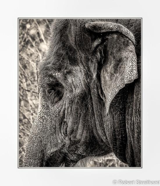 It's Elephantary my dear Watson