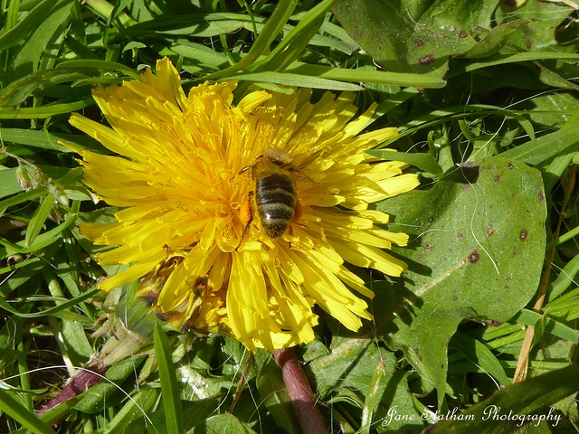Beautiful Bee Botty Thursday.