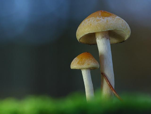 Pilze im Winter
