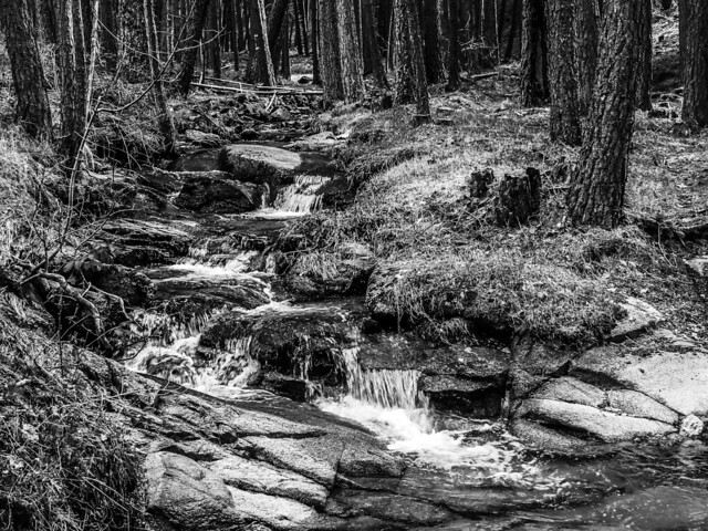 Creek in the woods