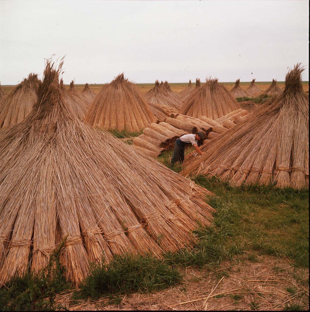 09. Скирды соломы в поле