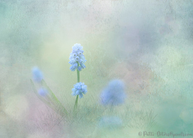 Spring Ephemeral with Texture - Muscari