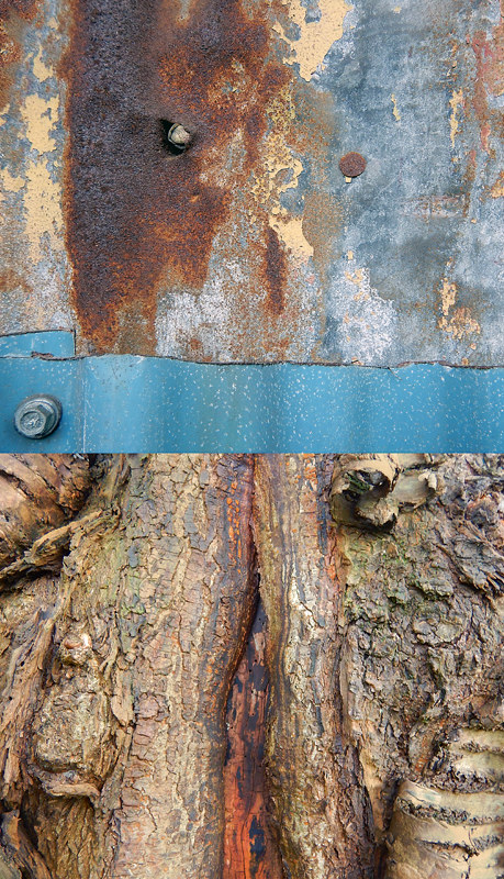 Abstract diptych combining the texture of rusty corrugated metal and a blue strip, with fissured tree bark