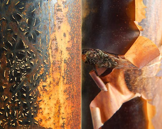 Abstract diptych of rusty cracked paint on a bollard combined with the peeling bark of a Paper Maple tree