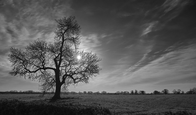 Mono-tree-chromatic 3