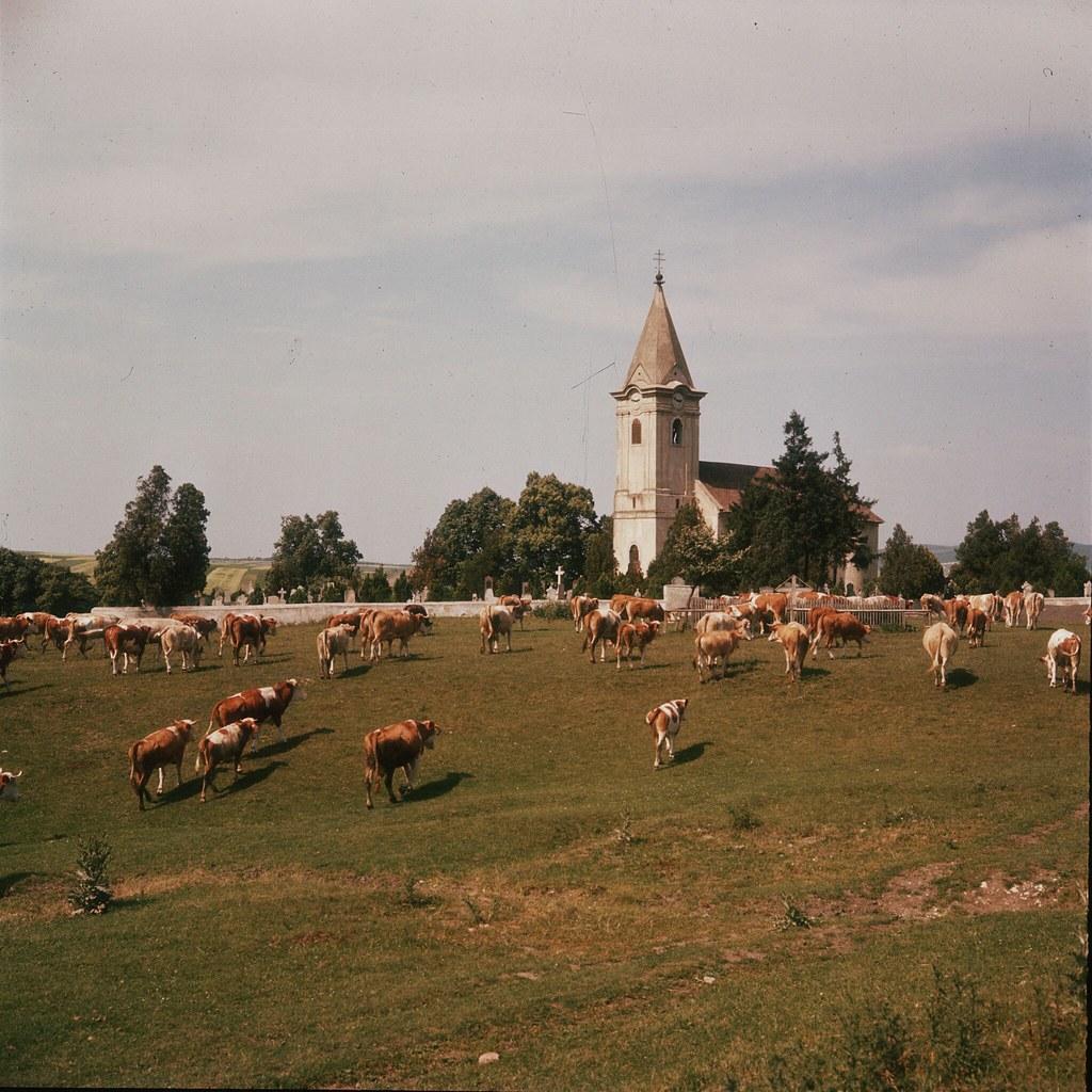 11. Церковь рядом с коровьим выпасом в Бургенланде