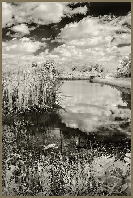 Lake Woodruff IR #31 2021; Water Gague