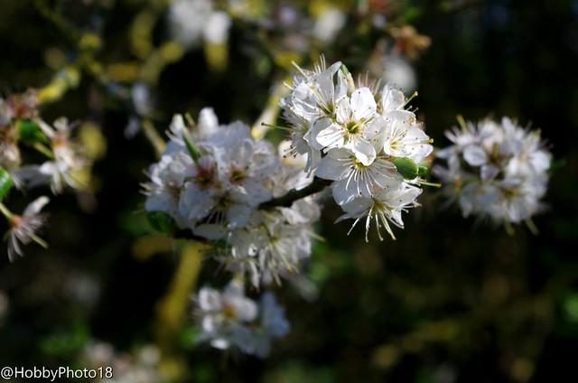 Le printemps fleurit ce qu'il touche