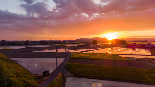 夕焼け drone 田園風景 sunset ドローン reflection 反射 landscape djimini2 風景 rurallandscape 水田 小山市 栃木県 日本