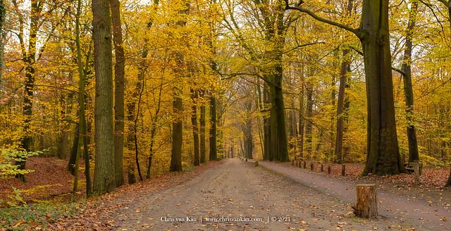 Autumn Colors, Netherlands