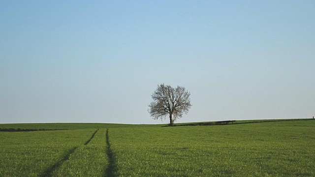 a solitary tree in the middle of a green field