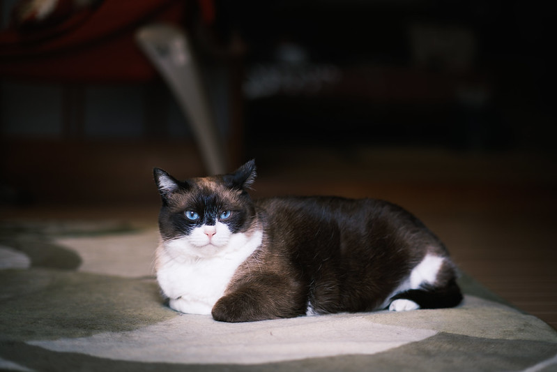 Portrait of KINA