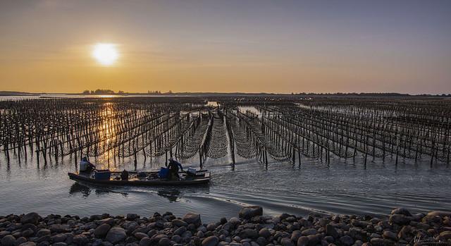 Oyster Farm Series [6]