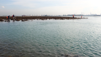Living reefs of Terumbu Bemban, May 2021