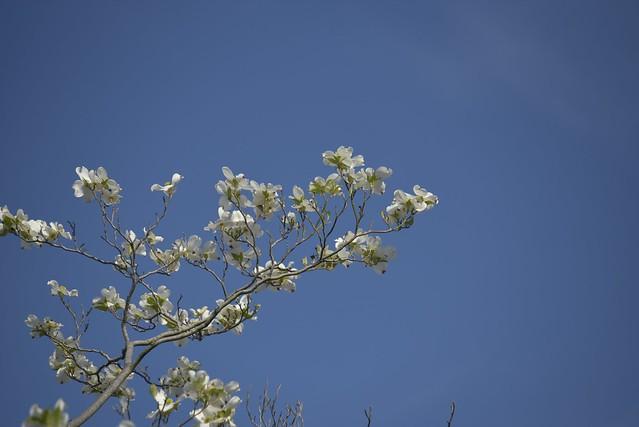 Spring Time 20