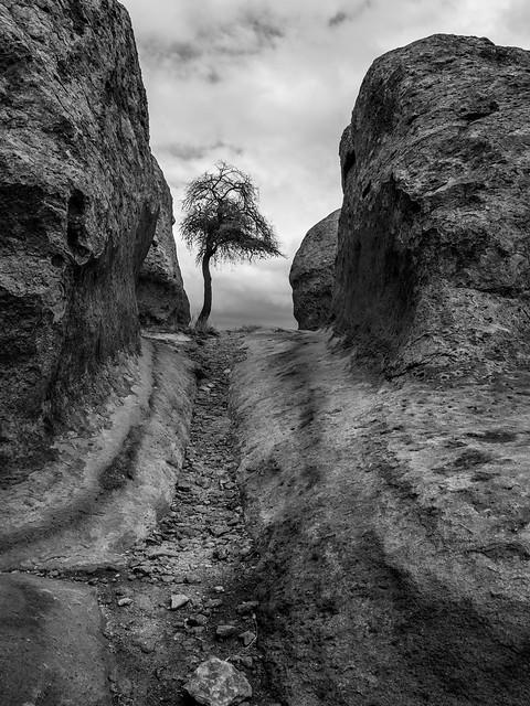 2021 City of Rocks Lone Tree (Explore 2 May 2021)