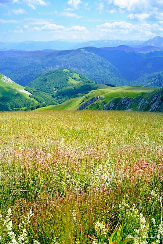 Флора в национальном парке Биоградская гора