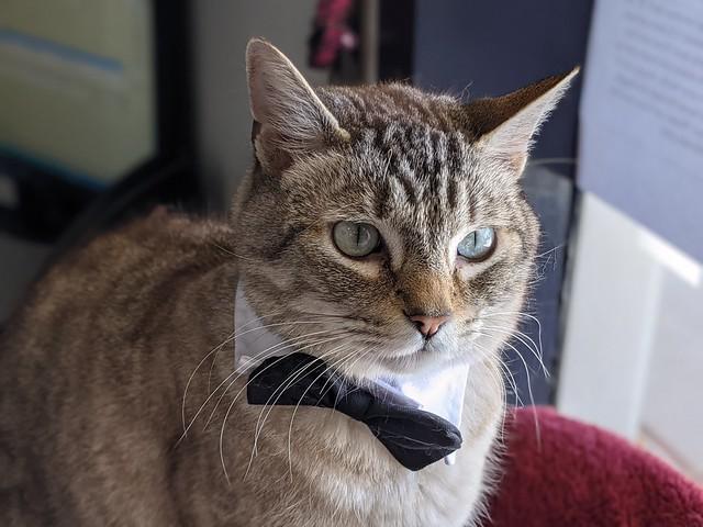 Whiskey, Vet Office Cat