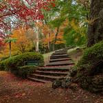 Autumn at Breenhold Gardens