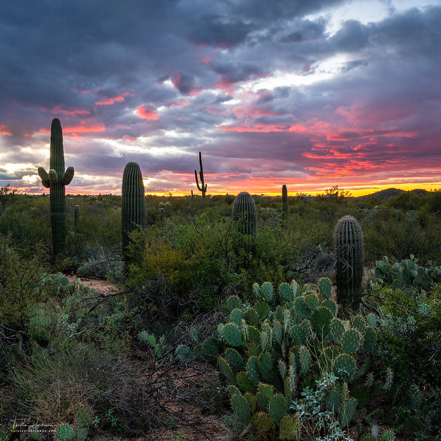 Saguaro National Park (USA) [Explored]