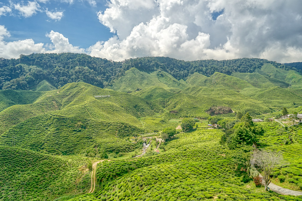 The hills of Cameron Highlands