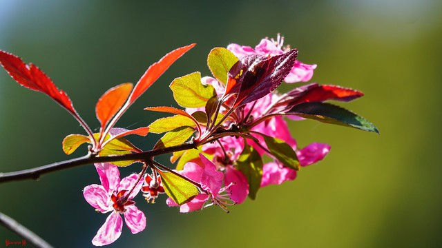 9686 - flower