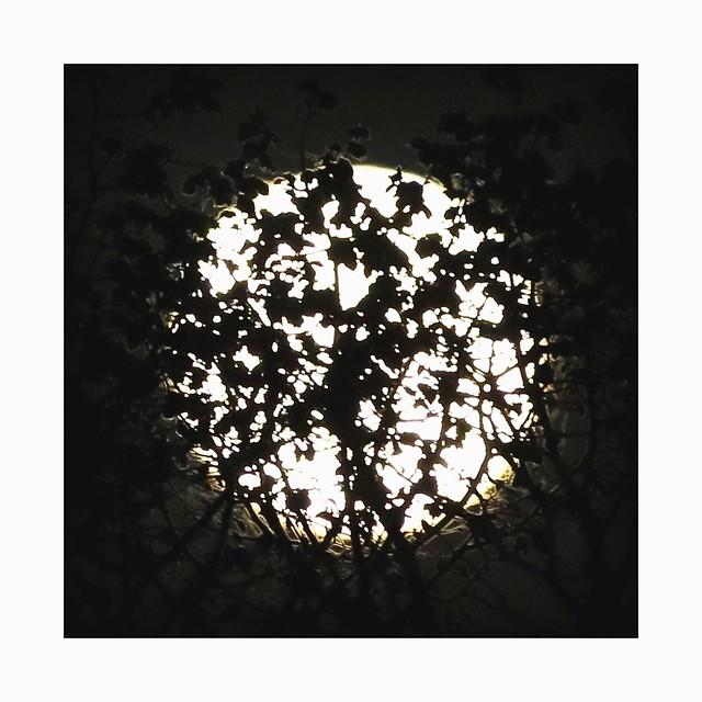 Lune masquée (Explore)