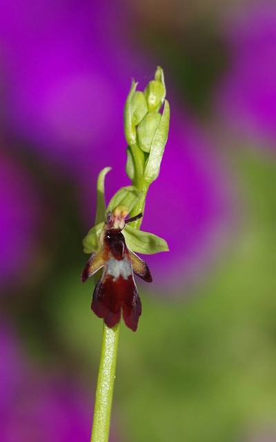 A little bit of wild orchid colour from this morning