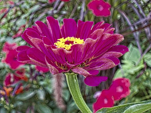Stratford Ontario ~ Canada ~ Red  Flower  ~ Botanical Garden