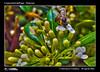 1177_D8F_0814_bis_fiore_insetti_centro_bonocore