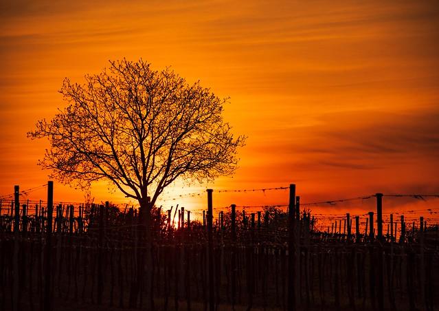 Weinviertel Sonnenuntergang