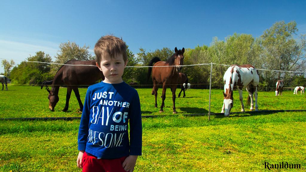 Sad Dominik with horses