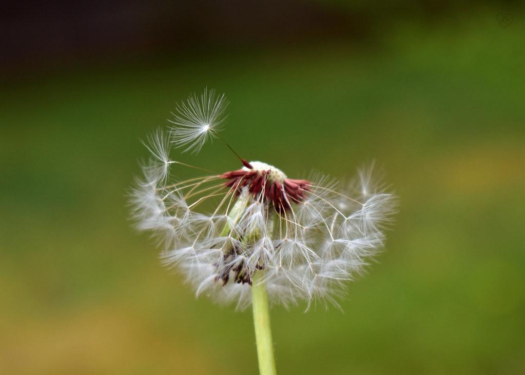 [43/100x] Make A Wish.