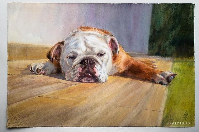 Bella (Bulldog inglés)