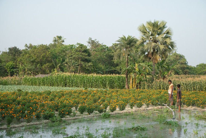 Water flowing out of delivery pipeline in a solar irrigation pump site located in Bihar, India