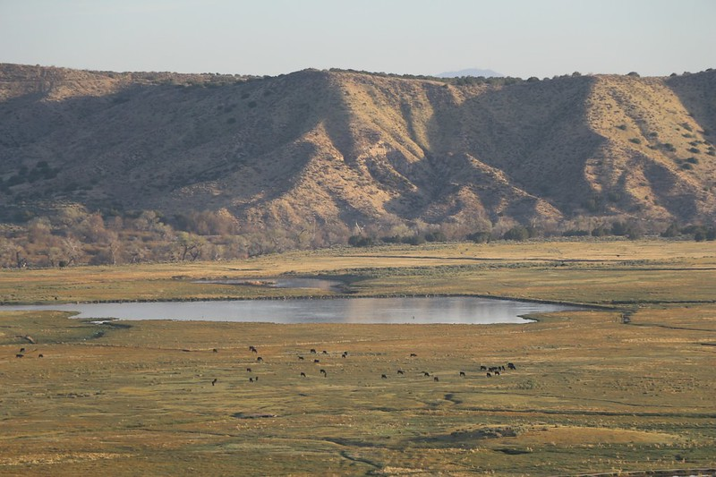 Zoomed-in view of cows grazing near a pond out in the Mojave River Forks