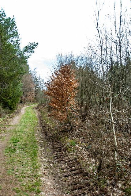 Hiking - Ramspau