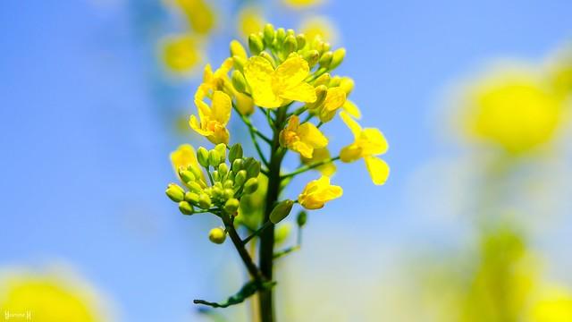 9689 - Yellow