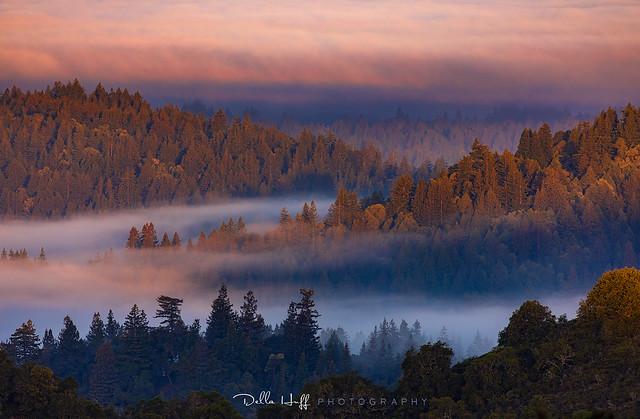 Redwood Fog Blanket - Santa Cruz Mountains