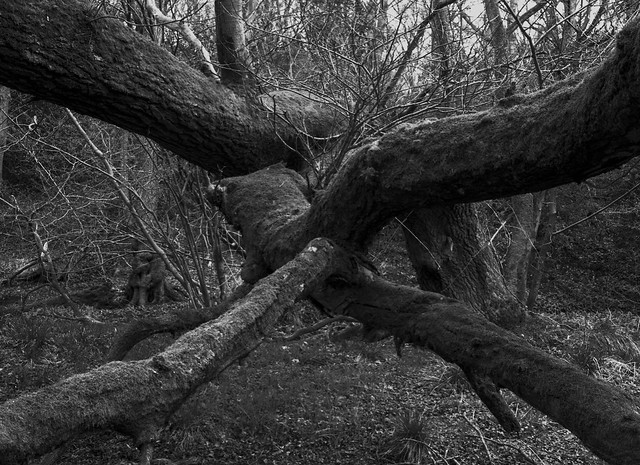 Hyons Wood, Mamiya 645E with 55mm Lens, Acros II in HC110