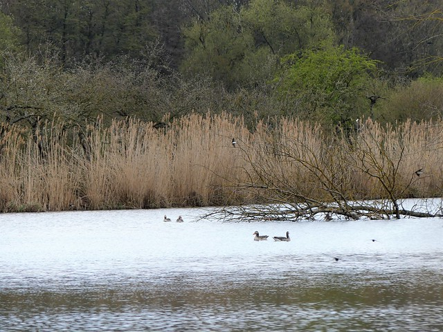 NSG Reinheimer Teich