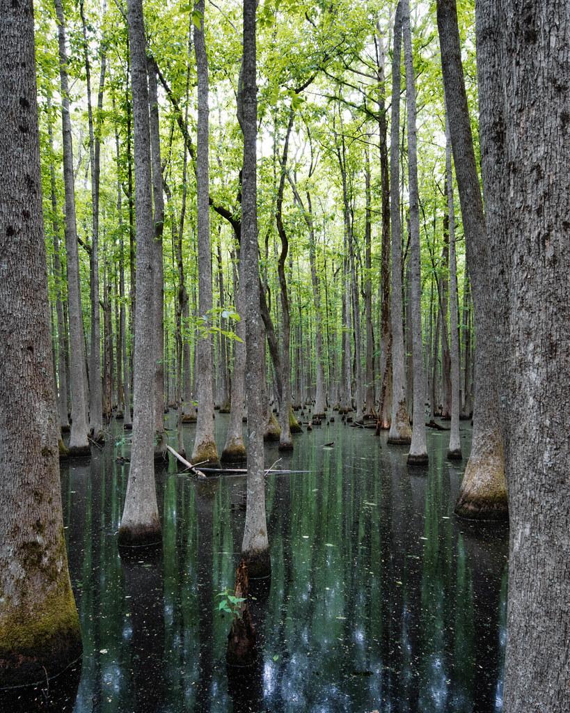 Louisiana Purchase State Park. Monroe County, Arkansas. 2021.