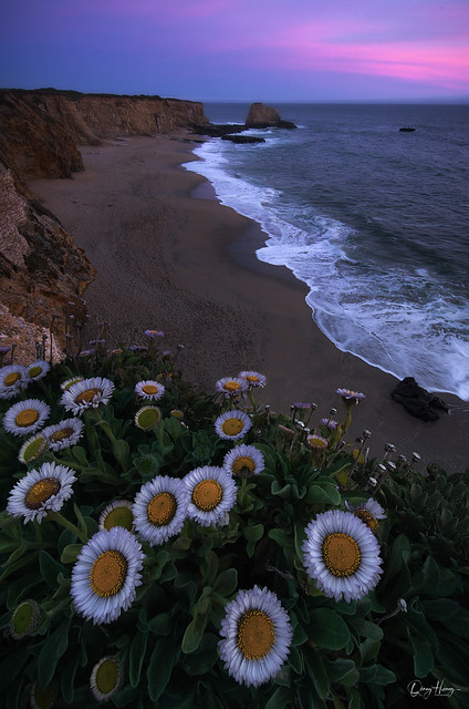Flowers by the cliff