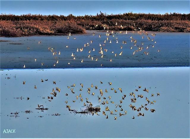 Birds_Reflection_Over Water--explore