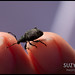 Weevil recovering after being rescued from the bathroom